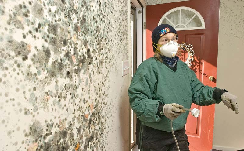 mold removal New Jersey